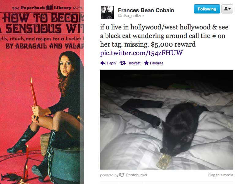 frances bean cobain black cat reward