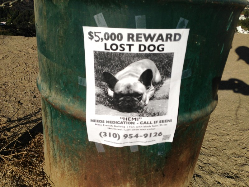 reward for lost dog