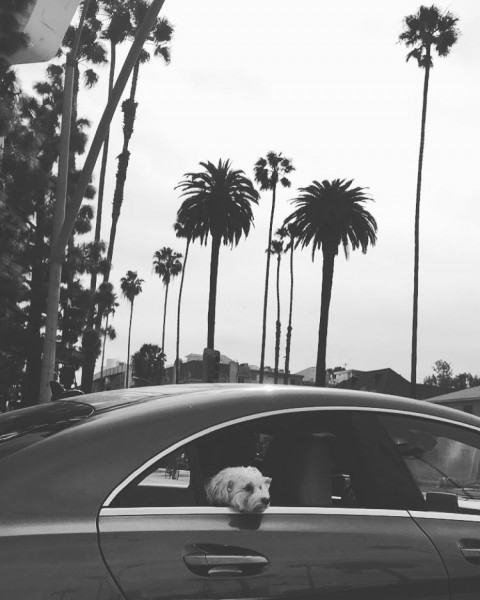 beverly hills dogs